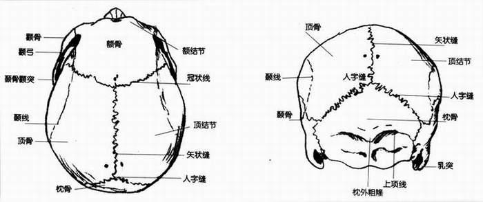 头部骨骼结构名称示意图