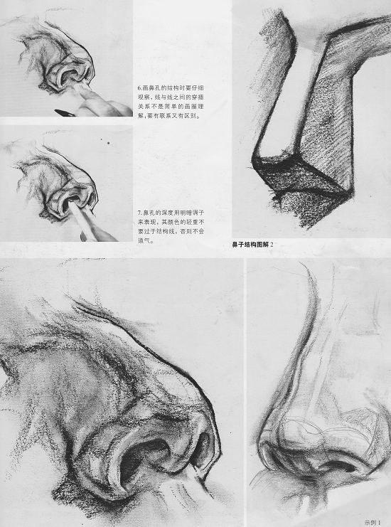 素描头像鼻子结构图片