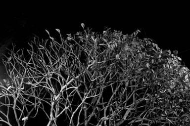 黄威杰摄影个展:梦见树
