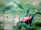 感悟自然――当代中国花鸟画名家精品展