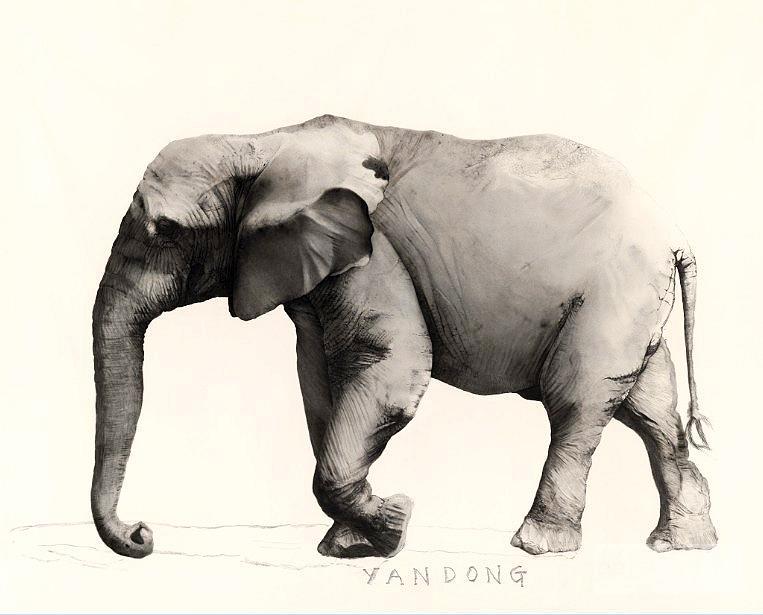 壁纸 大象 动物 763_615