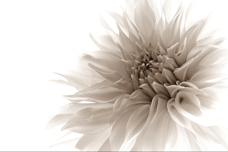微距摄影之植物篇